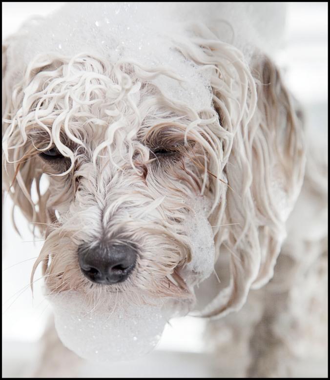 dog with bubble bath