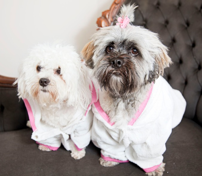 bathrobes for dogs