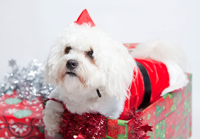 Christmas outfits for dogs