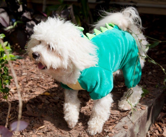 Dog dressed in dinosaur costume
