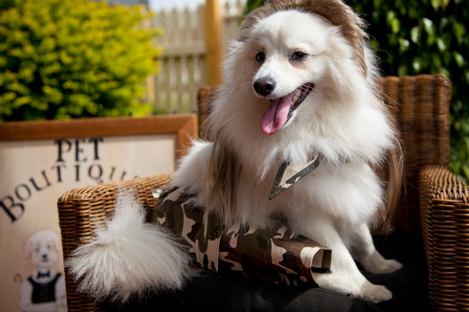 dog dressed as a bogan