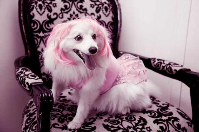 pretty in pink pooch