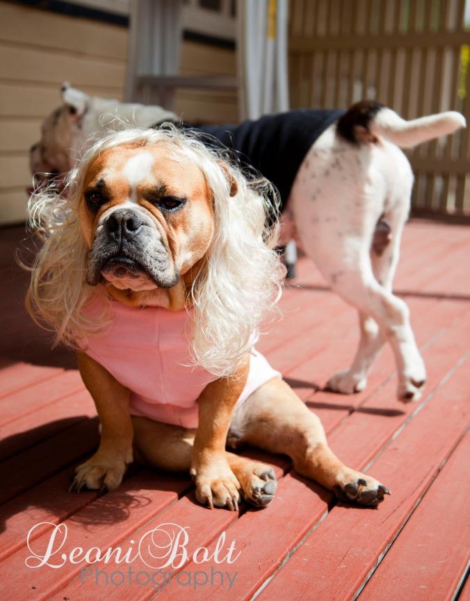 Tough dog in pink