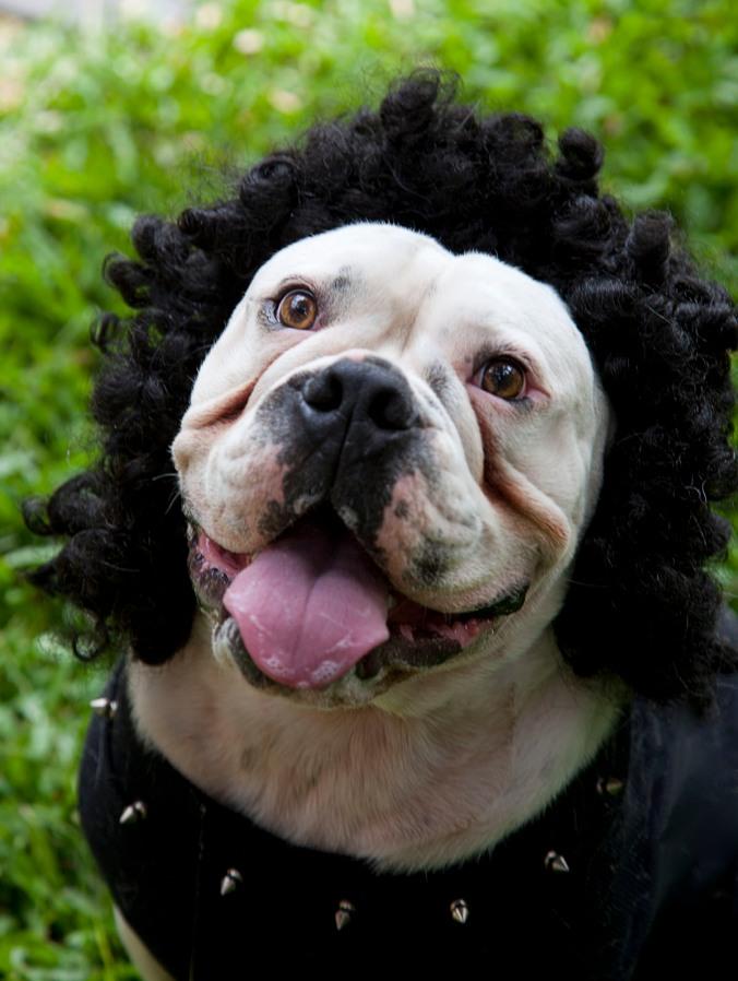 Dog dressed as Gene Simmons