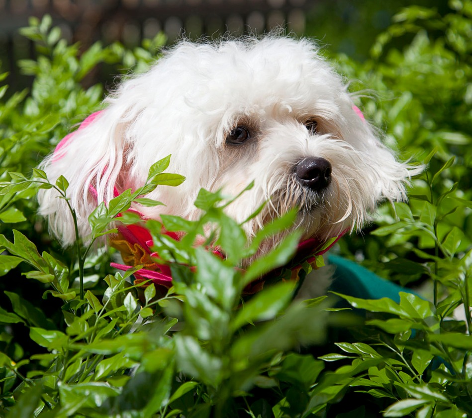 dog dressed as a flower in a hedge